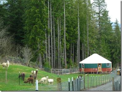 04-16-08 - 04-17-08 Large Yurt Raising 174