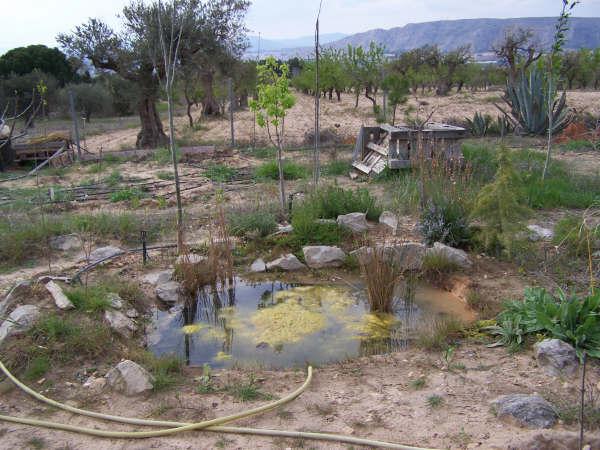 Proceso de construccin de mi estanque - Foro de InfoJardn