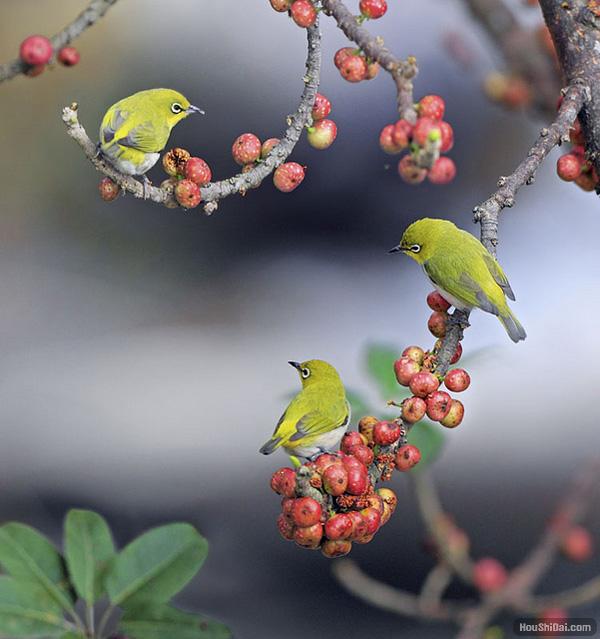 bird3