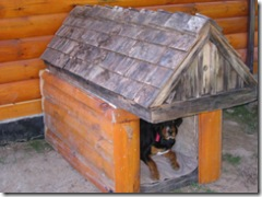 New doghouse for the boys 006