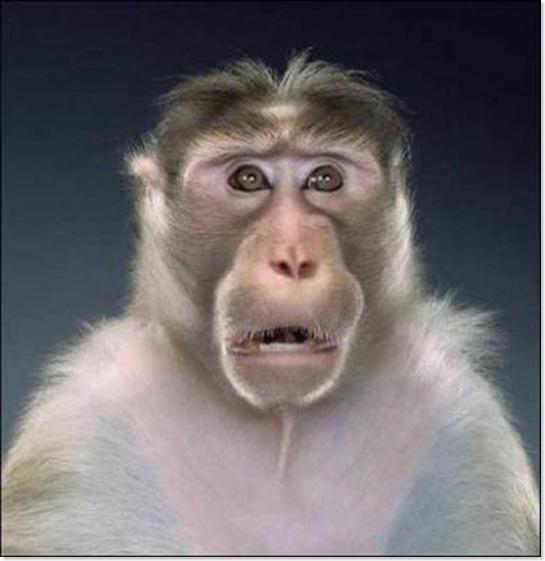 Monos (9)